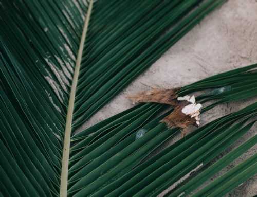 Palm Sunday – the power of love