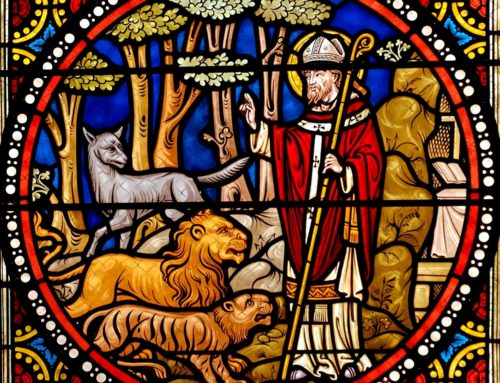 Compassion of the good shepherd